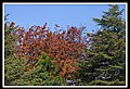 Autumn Leaves begin to fall-026 (5662852410).jpg