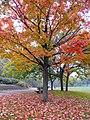 Autumn Scene... (1631235384).jpg