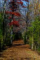 Autumn Trail Path RCR-TR-1.jpg