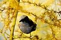 Autumn bird (22077455232).jpg