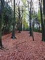 Autumn leaves - geograph.org.uk - 1582660.jpg