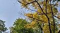 Autumn season in Butanic Garden فصل پاییز در باغ بوتانیکال تفلیس 21.jpg