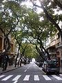 Avenida Zarco, Sé, Funchal - 22 Jan 2012 - SDC14980.JPG