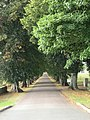 Avenue of Trees, RAC - geograph.org.uk - 53321.jpg