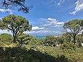 Ayvalık from pine forest.jpg