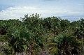 Bahamas 1989 (767) San Salvador (26264160921).jpg