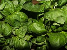 La migliore qualità del basilico genovese DOP viene prodotta nella delegazione genovese di Pra'