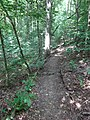 Battle Creek Cypress Swamp 64.jpg