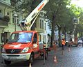 Baumpflege 153507.jpg