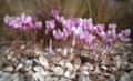 Beach Flowers (27950543004).png
