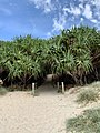 Beach access pin Casuarina, New South Wales 02.jpg