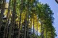 Bear Jaw Trail No. 26 (29861275771).jpg