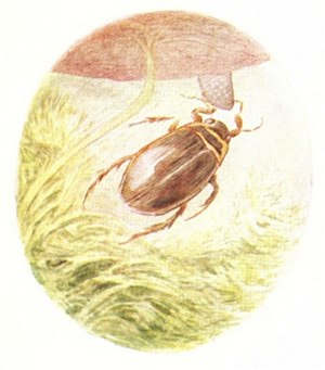Beatrix Potter - A Tale of Jeremy Fisher - Illustration from page 28.jpg