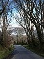 Beech avenue near Berridon - geograph.org.uk - 743724.jpg