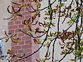 Beelitz Heilstätten -jha- 556168246869.jpeg