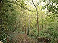 Benskin's Wood - geograph.org.uk - 372991.jpg