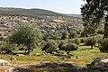 Bierain Sub-District, Jordan - panoramio - Adeeb Atwan (18).jpg