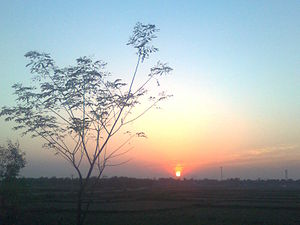 Binuria - Binuria in the morning