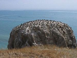 Qinghai Lake - A bird island