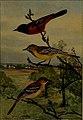 Bird lore (1910) (14755474975).jpg