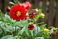 Bisztynek, kwiatek 1.jpg