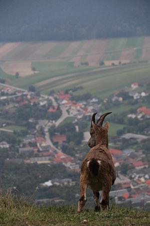 Blick von der Hohen Wand ins Tal.JPG