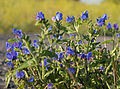 Blue (4841882250).jpg