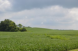 Soybean fields north of Rushville