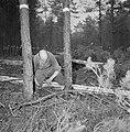 Bosbewerking, arbeiders, boomstammen, gereedschappen, Bestanddeelnr 251-9138.jpg