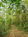 Bosque húmedo de Chaguaramal.jpg