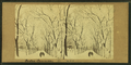 Boston Common in winter, from Robert N. Dennis collection of stereoscopic views.png