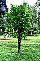 Botanic garden limbe74.jpg