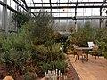 Botanischer Garten Düsseldorf - Südafrika 4.jpg
