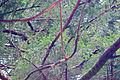 Branches at Bald Peak.jpg