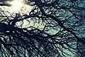 Branches at RBG (6997951152).jpg