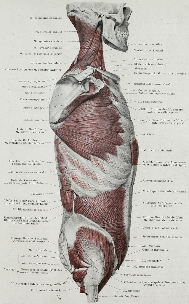 File:Braus 1921 120.png - Wikimedia Commons