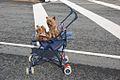 Brest2012-Philweb 82.jpg