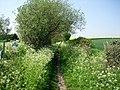 Bridleway - geograph.org.uk - 800479.jpg