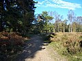 Brindley Heath, Cannock Chase - geograph.org.uk - 276333.jpg