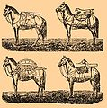 Brockhaus and Efron Encyclopedic Dictionary b17 232-0.jpg