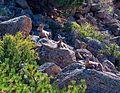 Browns Canyon Area of Critical Environmental Concern, Colorado (15515815847).jpg