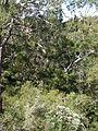 Budj Bim ‐ Mt Eccles National Park, Victoria, Australia 41.jpg