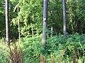 Budka w lesie - panoramio.jpg