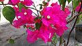 Bunga kertas (17).jpg