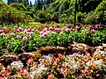 Butchart Gardens - Victoria, British Columbia, Canada (28871154510).jpg