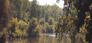 Butte Creek Ecological Reserve - Lower Butte Creek