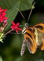 Butterfly 15 (4867250416).jpg