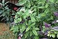 Butterfly Rainforest FMNH 06.jpg