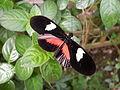Butterfly Stratford 03.JPG