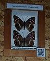 Butterfly in zoo.jpg